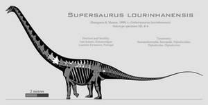 Supersaurus lourinhanensis skeletal reconstruction