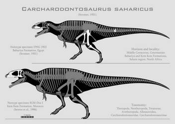 Carcharodontosaurus saharicus skeletals by SpinoInWonderland