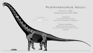 Puertasaurus reuili skeletal reconstruction by SpinoInWonderland