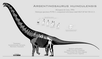 Argentinosaurus huinculensis skeletal