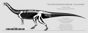 Yunnanosaurus huangi skeletal reconstruction by SpinoInWonderland
