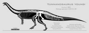 Yunnanosaurus youngi skeletal reconstruction by SpinoInWonderland