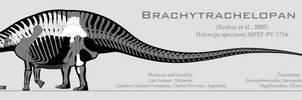 Brachytrachelopan mesai skeletal reconstruction by SpinoInWonderland