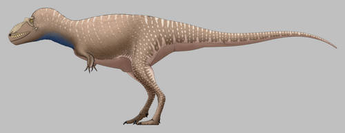 Albertosaurus sarcophagus by SpinoInWonderland