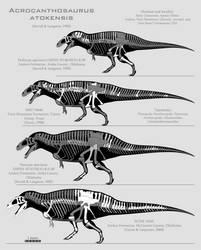 Acrocanthosaurus atokensis skeletals by SpinoInWonderland