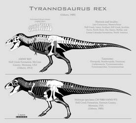 Tyrannosaurus rex skeletal reconstructions by SpinoInWonderland