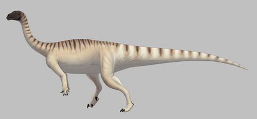 Mussaurus patagonicus (for Wikipedia)