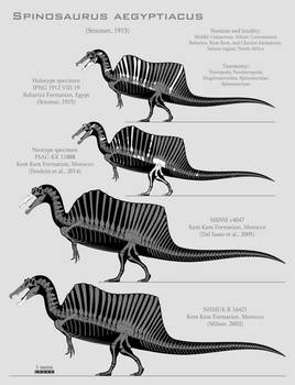 Spinosaurus aegyptiacus skeletal reconstructions