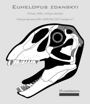 Euhelopus zdanskyi skull reconstruction