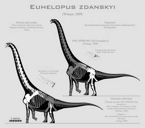 Euhelopus zdanskyi skeletal reconstructions