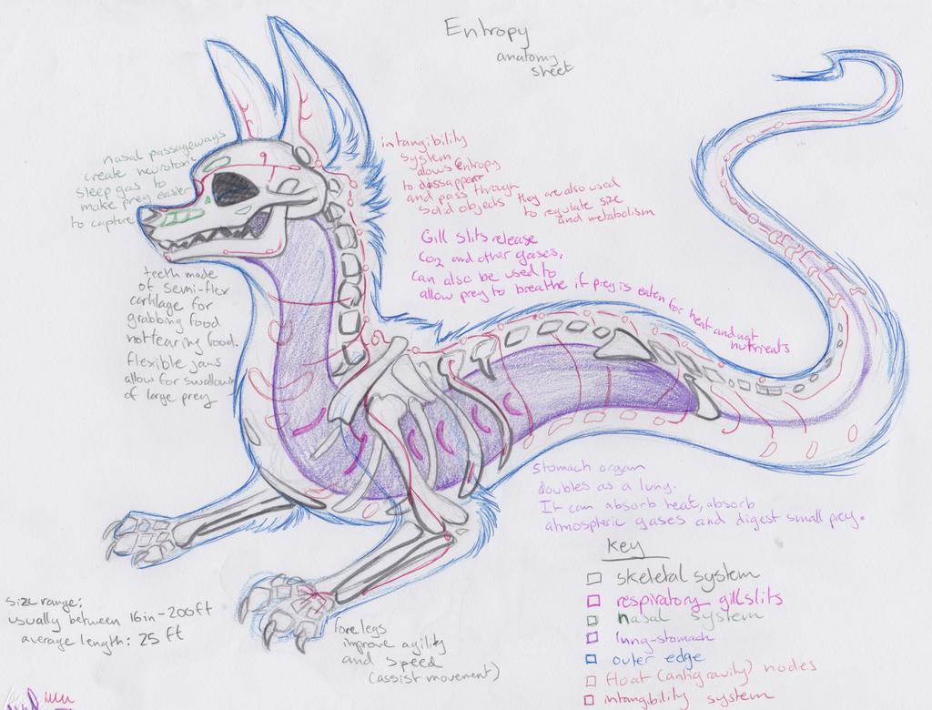 Entropy Anatomy by MF99K