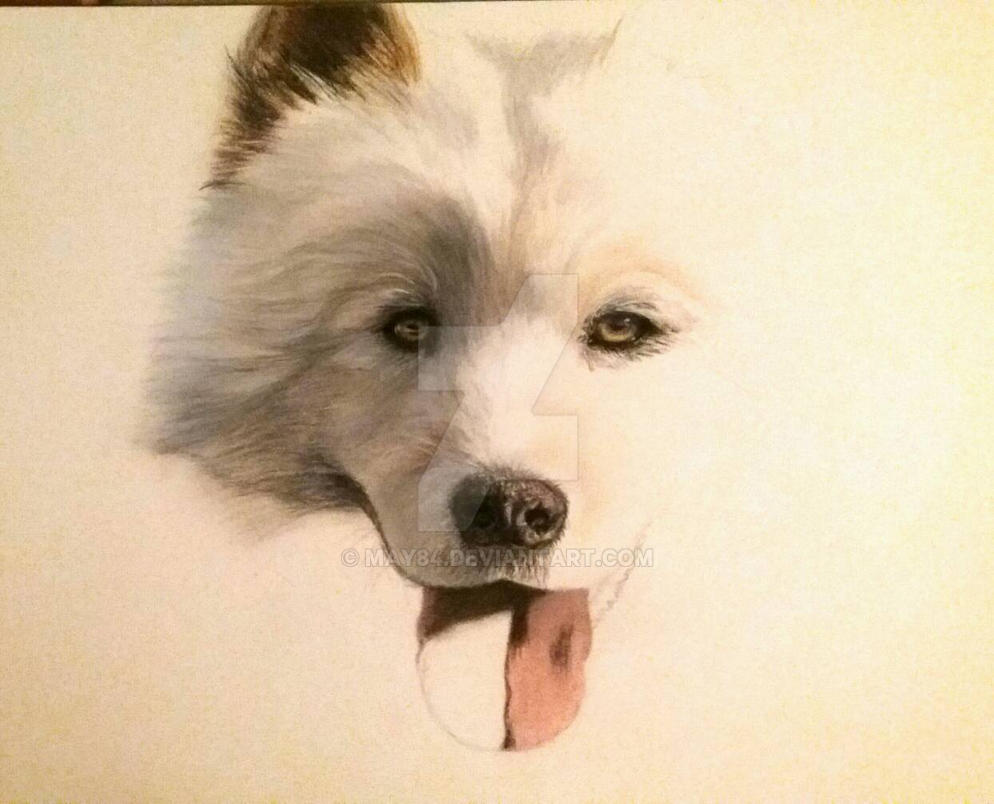 Samoyed - work in progress by May84
