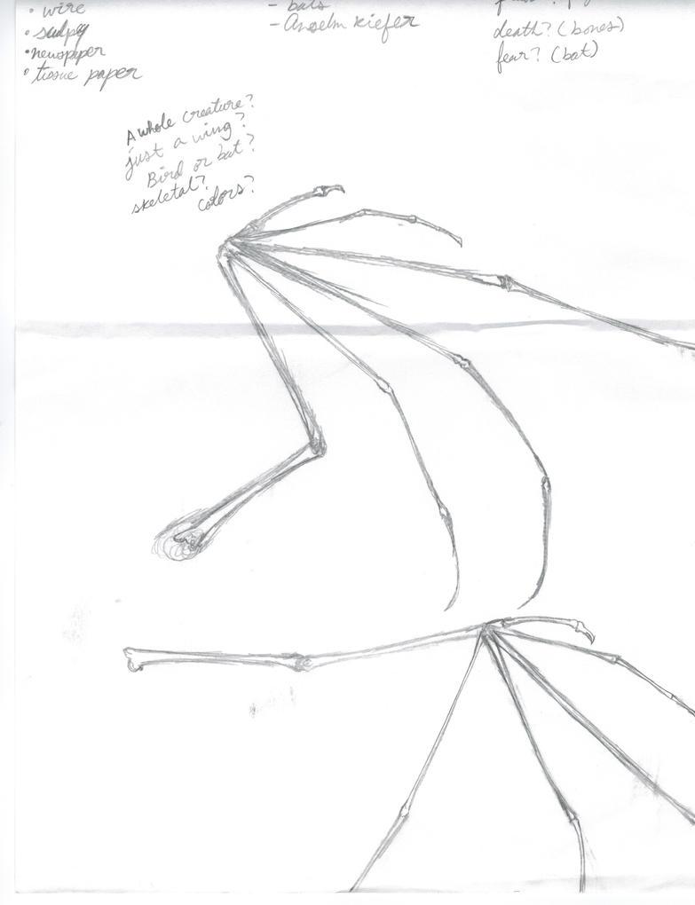Bat Wing Anatomy Sketch by Tigerfiend on DeviantArt