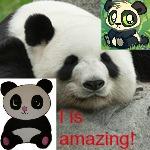 Panda Avvie by CassidyLynne1