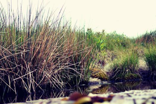 Edge of pond