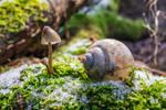 Slugs garden