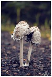 Fungusamongus by ashleyalexandraphoto