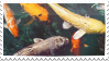 Koi fish stamp by gillcat