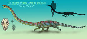 Tanystropheus longobardicus