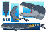 Dakosaurus Study