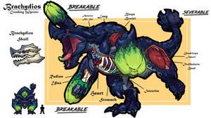 Brachydios anatomy