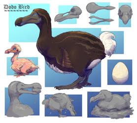 Dodo Bird Study