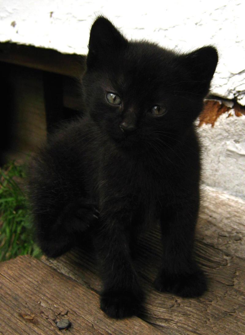 Black Kittens 102