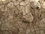 Cracked Mud Texture 2