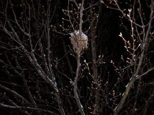 FreshSnowTrees-Nest