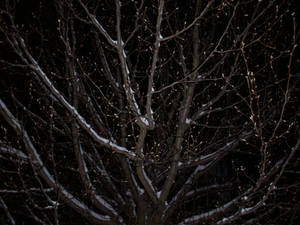 FreshSnowTrees-StarLike