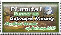 Plumita1-Runner-up- Unframed Nature Contest by marthig