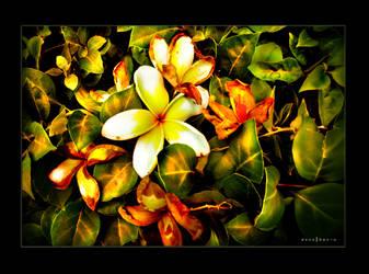 Flourish and Fade by donutello