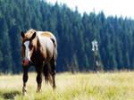 Horse- stock