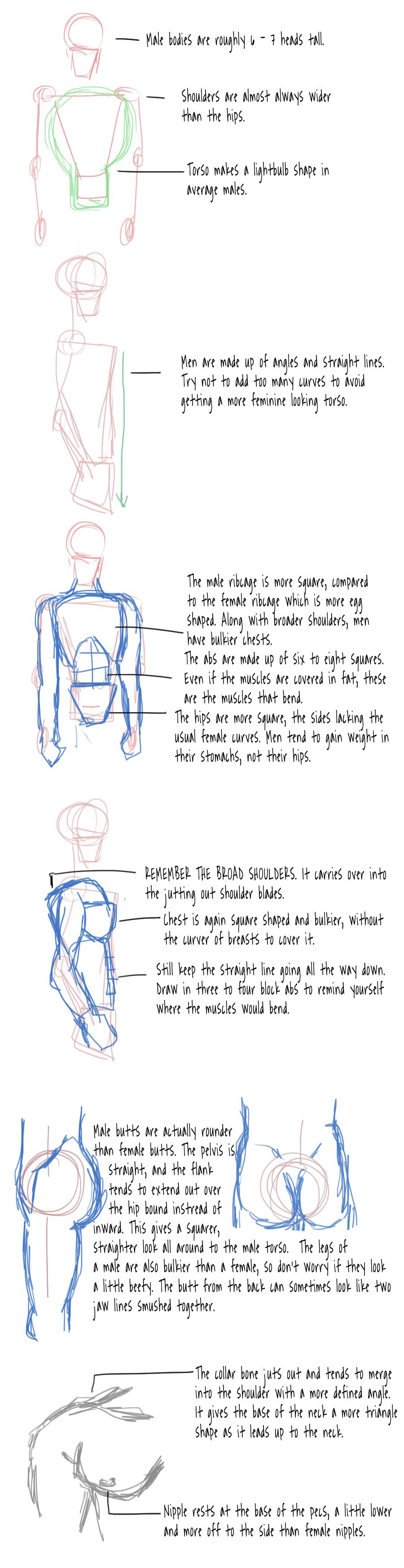 Male Anatomy Tutorial by tony-dinozzo on DeviantArt