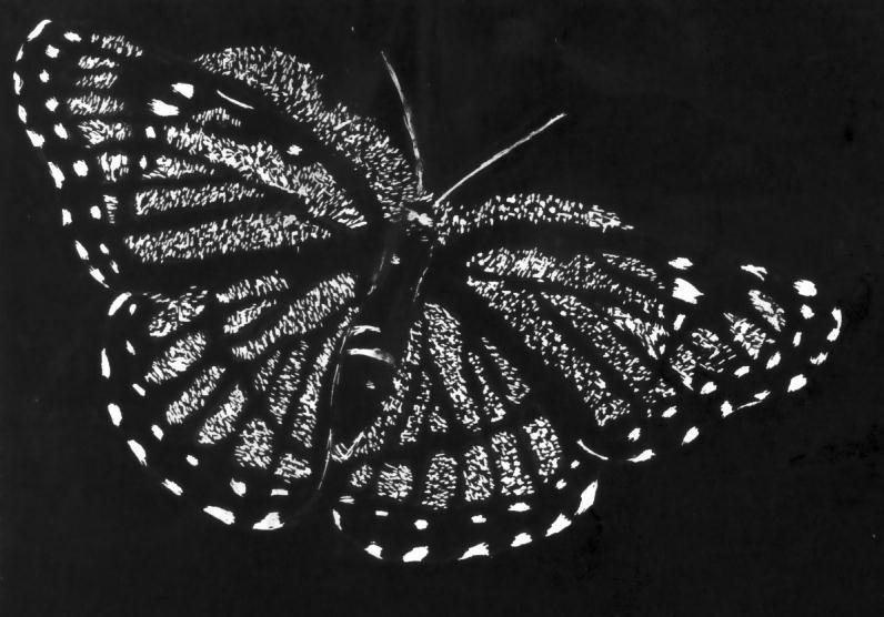 Butterfly scratchboard - photo#13