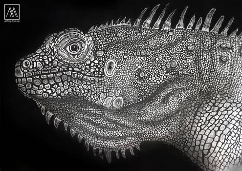 Iguana Pen and Ink