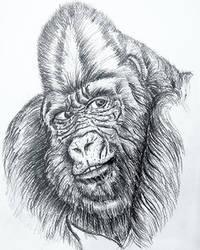 Animal Study - A Quick Sketch
