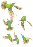 humming-bird by Smok15