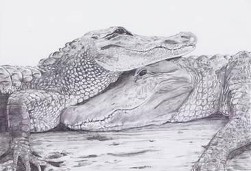 Alligators by Smok15
