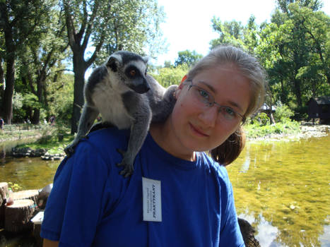 Ring-tailed lemur and me