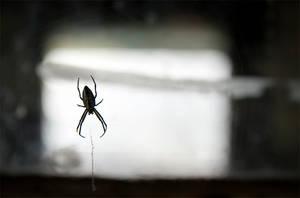 Faithful's Hut Spider by MartinBennet