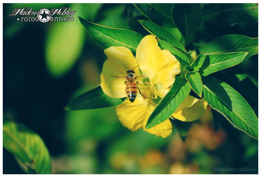 Honey Bee by Maddiepantz