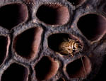 Alien's nest by Miracidium
