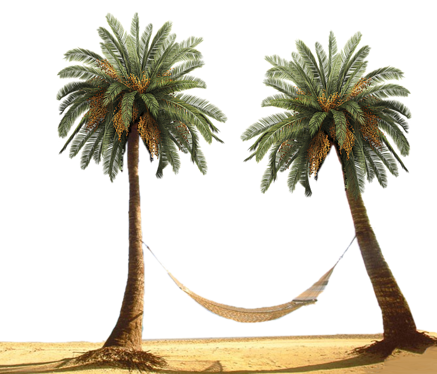 Palm Tree by designway24