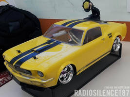 Shelby1