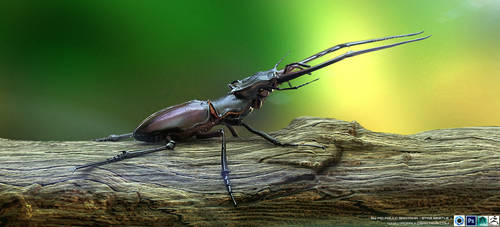 Stag Beetle by PioPauloSantana