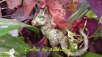 My little pony custom Cinnia Kirin