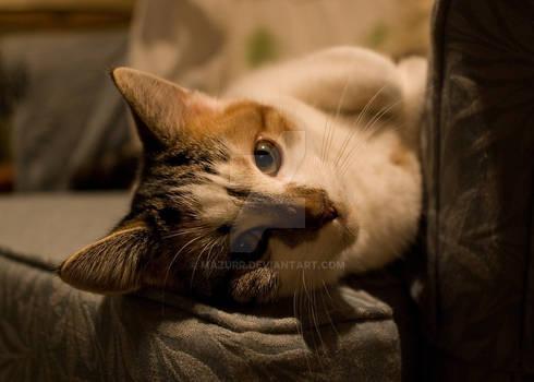 'Whatcha doin'?'