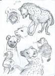 Hyena sketch