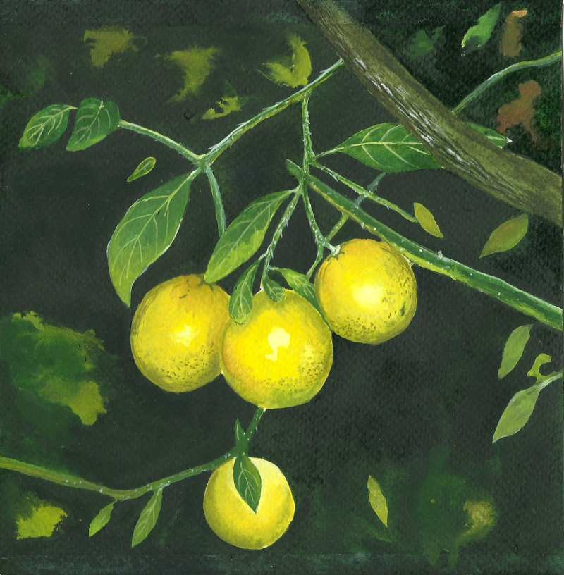 Lemons by aakritiarts